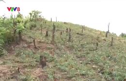 Đăk Lăk: Khó khăn trong thu hồi đất lâm nghiệp bị xâm chiếm