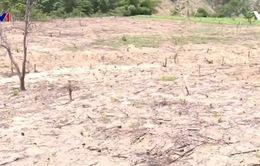Tình trạng đất bỏ hoang sau nắng hạn ở Nam Trung Bộ