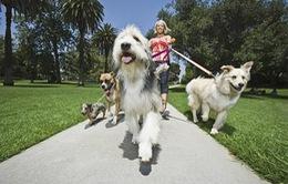 Kết hợp chơi Pokemon Go và dắt chó đi dạo