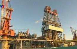 Giá dầu châu Á tăng bất chấp dự trữ dầu của Mỹ cao kỷ lục