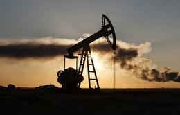 Thị trường dầu mỏ thế giới năm 2016 sẽ tái cân bằng