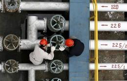 Sản lượng dầu ngoài OPEC dự báo tăng cao