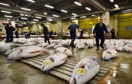 Nhật Bản tổ chức phiên đấu giá cá ngừ đầu tiên trong năm 2016