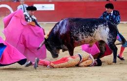 Đấu sĩ bị bò tót húc chết ở Tây Ban Nha