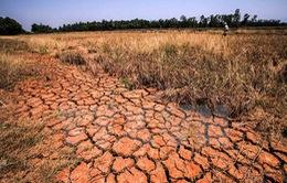 """Nông dân vùng hạn: """"Đồng khô cỏ cháy, lúa mất mùa, trắng tay rồi"""""""