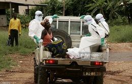 11 người Việt tại Angola tử vong do sốt rét ác tính