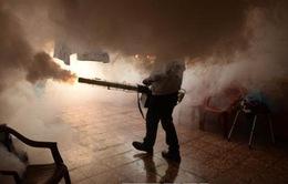 Brazil đẩy mạnh ngăn chặn dịch bệnh do virus Zika