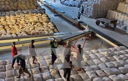 DN xuất khẩu gạo tăng cường kiểm tra vùng nguyên liệu