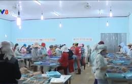 Phú Yên: Xử phạt doanh nghiệp xả thải chưa qua xử lý ra môi trường