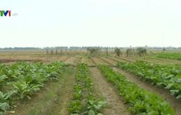 Bộ NN&PTNT khuyến cáo nông dân về lấy nước đổ ải đợt 1