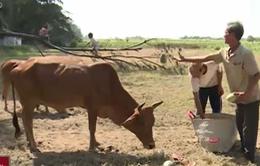 Trà Vinh: Hàng tấn nông sản bị đổ bỏ vì thiếu đường kết nối