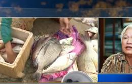 PGS.TS Nguyễn Chu Hồi: Cá chết hàng loạt ở miền Trung, phải có lượng độc tố quy mô lớn