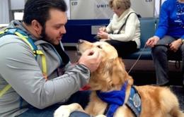 Sử dụng chó để trấn an hành khách tại sân bay