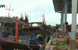 ĐBSCL: Khó phát triển đội tàu đánh bắt xa bờ do sản lượng giảm
