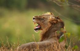 Động vật hoang dã giảm hơn một nửa trong 40 năm
