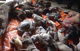Hà Tĩnh: Thu giữ gần 200kg động vật hoang dã ướp lạnh