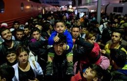 Số người tới Đức xin tị nạn giảm mạnh
