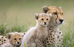 Vương quốc Anh đi đầu trong chống buôn bán trái phép các loài hoang dã
