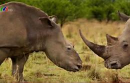 Việt Nam lần đầu tổ chức Hội nghị quốc tế về buôn bán động vật hoang dã