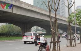 Cây xanh chết khô - Người dân Hà Nội thiếu bóng mát ngày hè