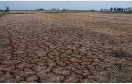 """Hạn hán ở Ninh Thuận: Đất """"nứt toác"""", nước cạn kiệt"""