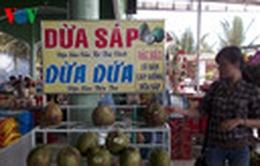 Trà Vinh: Dừa sáp 200.000 đồng 1 quả vẫn không đủ bán