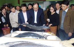 Hải sản ở Quảng Bình đã an toàn