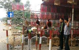 Bày bán tràn lan chim, cò trên QL Quản Lộ - Phụng Hiệp (Bạc Liêu)