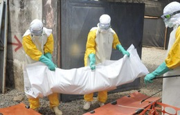 Dịch Ebola không còn là mối đe dọa toàn cầu