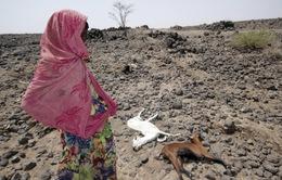 Ethiopia đối mặt với hạn hán nghiêm trọng nhất trong 50 năm