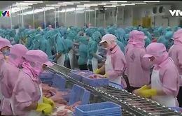 EU sẽ thanh tra toàn diện thực phẩm thủy sản nuôi