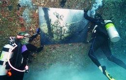 Triển lãm tranh... dưới biển