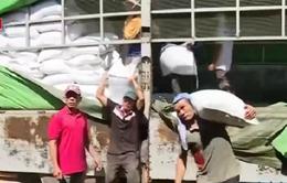 Thêm 5.000 tấn gạo cứu trợ ngư dân miền Trung