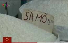Tràn ngập gạo Campuchia tại …vựa lúa gạo lớn nhất Việt Nam