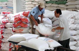 Việt Nam tham gia đấu thầu cung ứng gạo cho Philippines