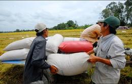 Trung Quốc tăng mua gạo theo đường tiểu ngạch