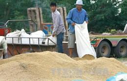 Thái Lan thông qua chương trình trợ giá gạo