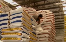 Thái Lan sẽ bán toàn bộ 11,4 triệu tấn gạo dự trữ