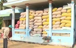 Chất lượng kém, gạo Việt đối mặt nguy cơ thua ngay trên sân nhà