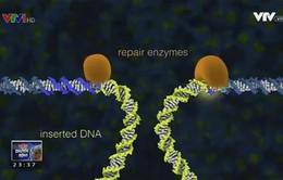 Chỉnh sửa gen để chữa bệnh thiếu máu hồng cầu lưỡi liềm