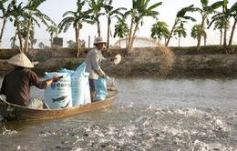 Giá cá tra Đồng bằng sông Cửu Long sụt giảm mạnh