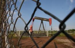 Tổng thống Venezuela kêu gọi xây dựng nền kinh tế ít phụ thuộc vào dầu mỏ