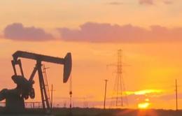 Giá dầu thô Brent lần đầu tiên tăng trên 40 USD/thùng