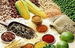 Giá lương thực tăng cao, kinh tế Ấn Độ và Trung Quốc chịu tổn thất nặng nề