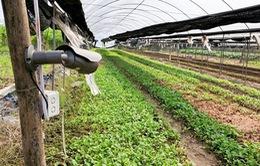 Sáng kiến dùng camera giám sát trồng rau sạch 24/24h