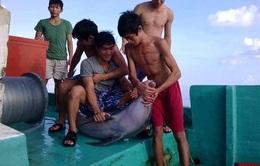 Phú Quốc vào cuộc truy tìm nhóm sát hại cá heo