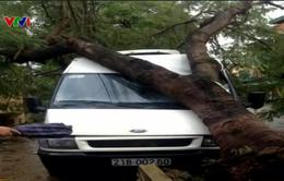 Lào Cai, Yên Bái: Giông lốc bất ngờ làm người chết, cây đổ, nhà tốc mái