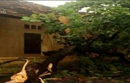 Dông lốc xuất hiện tại ngoại thành Hà Nội
