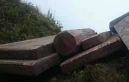 """Dân địa phương chở gỗ lậu, rừng giáp ranh Phú Thọ - Yên Bái """"chảy máu"""" hàng ngày"""