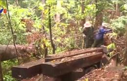 Đề nghị truy tố 19 đối tượng phá rừng đặc dụng Bà Nà - Núi Chúa